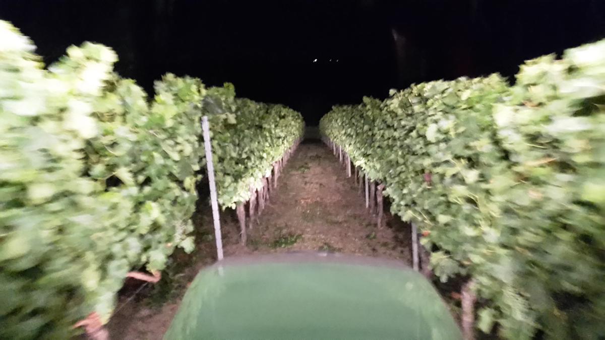 Die Sicht aus dem Weinbergsschlepper bei Nacht